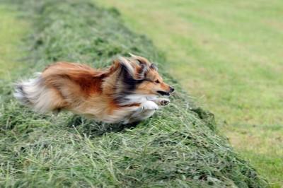 leapinggrass