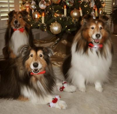 christmastreedogs