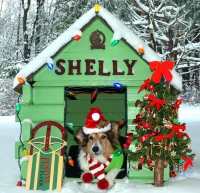 shellyhouse