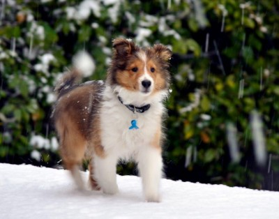 charliefirstsnow