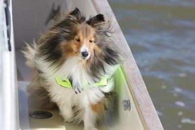 cooperboat