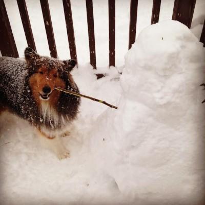 snowchew