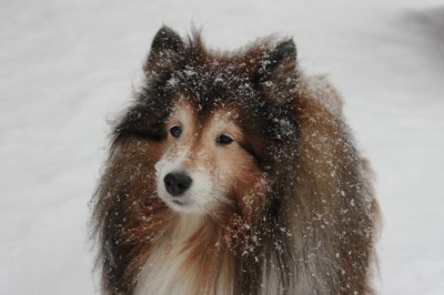 snowlulu
