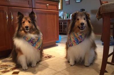 kobechesterscarfs