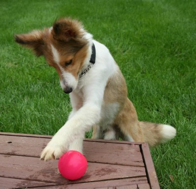 hutchball
