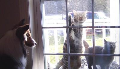cats-at-door-sheltie