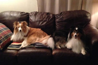 couchhogs