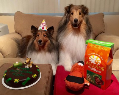 sheltie-birthday-cake-2