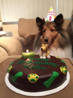 sheltie-birthday-cake