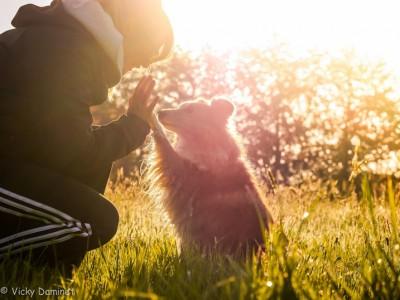 sheltie-sun-paw
