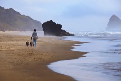 shelties-beach-walk