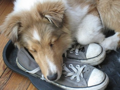 JW-Sheltie-shoes