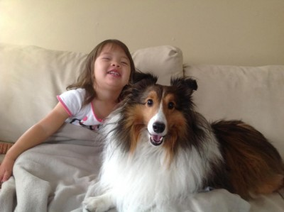 georgie-sheltie-smile