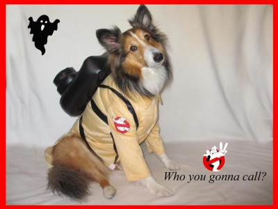 ghost-buster-sheltie