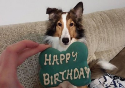 sheltie-dash-birthday-cookie
