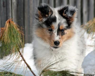 opal-puppy-snow