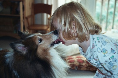 sheltie-kisses-child