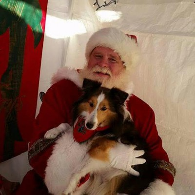 dakota-santa-sheltie