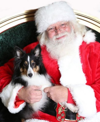 forest-sheltie-santa