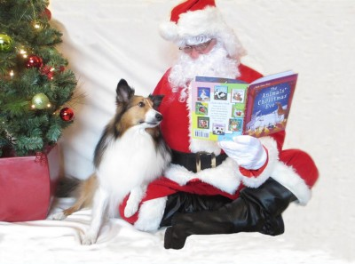 sheltie-teddy-santa