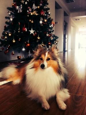 simba-christmas-tree