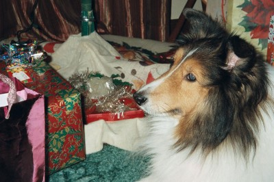 simba-sheltie-presents