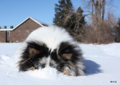 benny-snow-nose