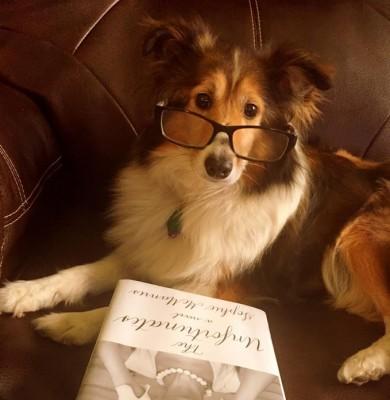 emmy-sheltie-glasses