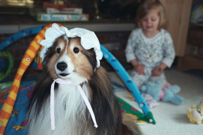 declan-hat-sheltie