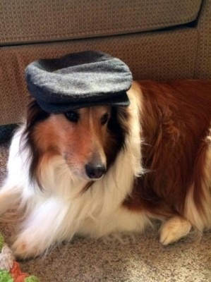 champ-sheltie-hat