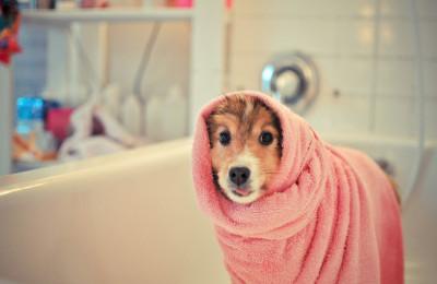 katty-sheltie-towel