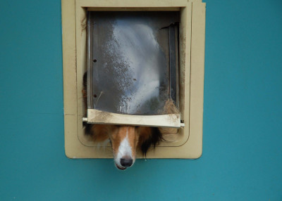 kellsey-dog-door