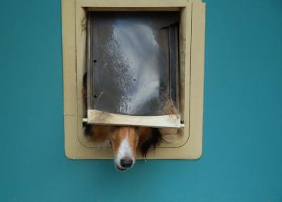 kellsey-dog-door