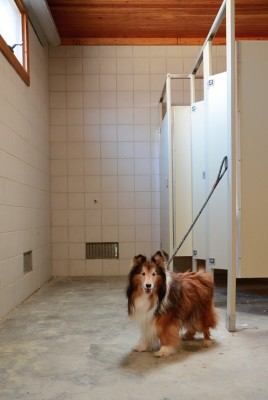 bravo-sheltie-guard