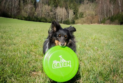 maggie-play-frisbee