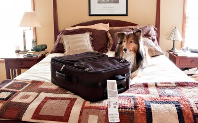 sheltie-suitcase-fergus