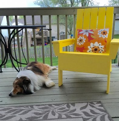 annie-sleeping-sheltie