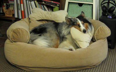 barkley-bed-pillow
