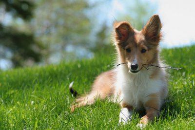 buddy-stick-puppy