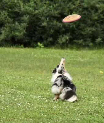 katie-play-frisbee