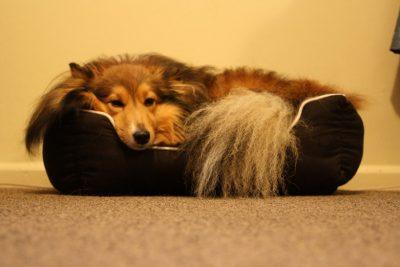 jordie-bed-sleeping
