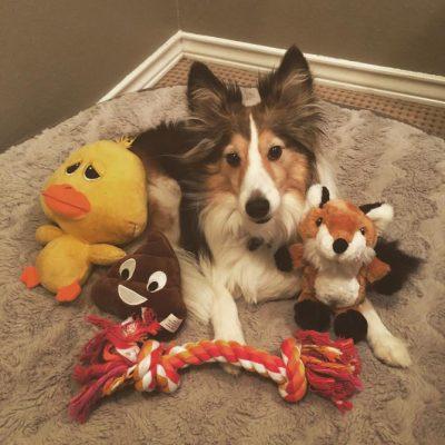 sheltie-aslan-toys