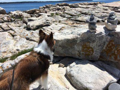 sheltie-stones-park