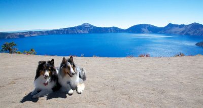 crater-lake-shelties