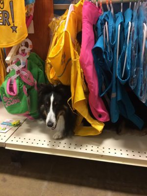 petsmart-sheltie-hide