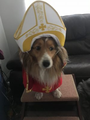 Sheltie dressed as pope