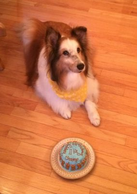 Sheltie birthday cake
