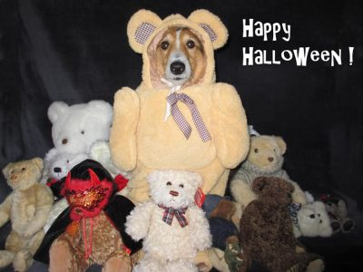 Sheltie in bear costume