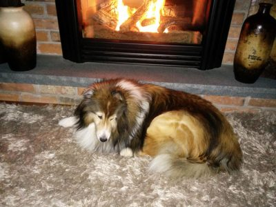 Sheltie by the fire