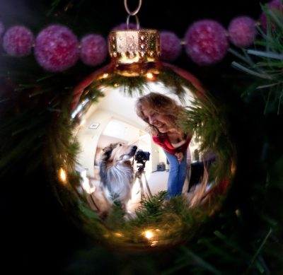 Sheltie reflection in ornament